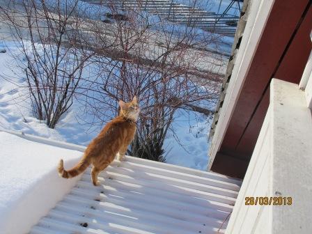 Jaha... Tiger gillar att vara på taket :P