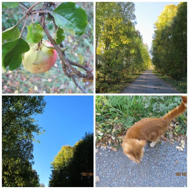 Höstens vackra färger (1)