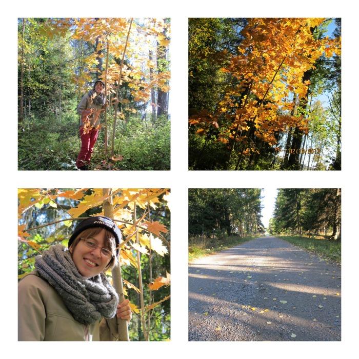 Höstens vackra färger (2)
