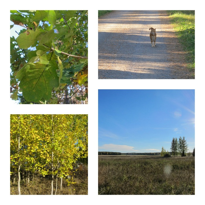 Höstens vackra färger (3)
