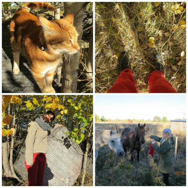 Höstens vackra färger (5)
