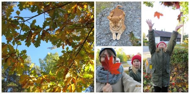 Höstens vackra färger (6)