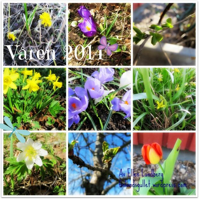 Våren 2014 (2)