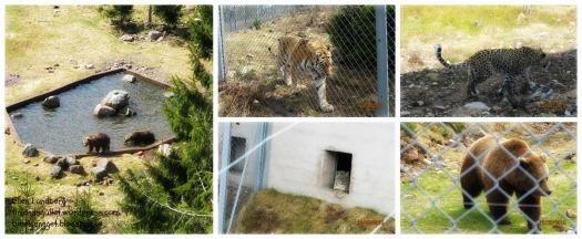 Orsa-björnpark, 15 (3)