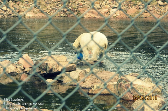 Orsa-björnpark, 15 (6)