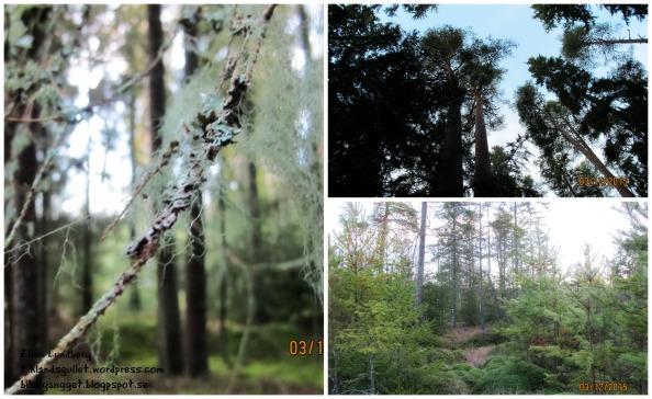 Skogen 15.